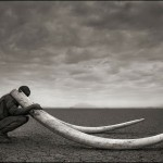 Ranger with Tusks of Elephant Killed At the Hands of Man, Amboseli 2011