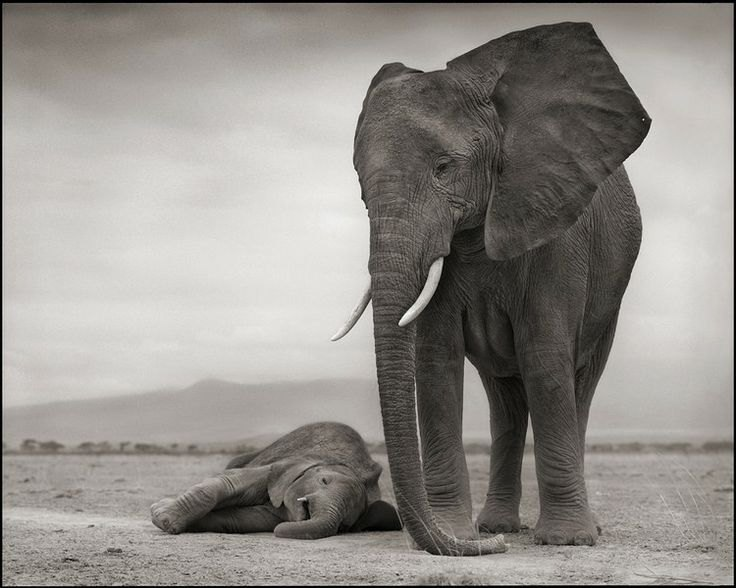 Nick_Brandt_sleeping_baby